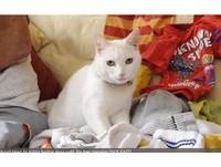 你又叼回什麼…英「白貓神偷」愛獻寶 飼主吃不消
