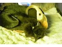 海鸚鵡母子依偎。(圖/屏東海生館)