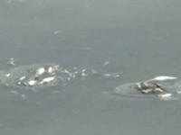 嘉義東石「鰲鼓溼地」 上萬隻魚翻肚暴斃《ETtoday 新聞雲》