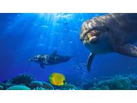 人類起源「海猿說」 皮膚光滑、覆滿脂肪是因活在水中