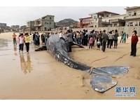 7噸巨鯨擱淺福建海邊 女童背上「溜滑梯」