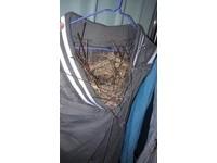 【圖】褲子被鳥蓋房!網友:別都更鳥巢!尊重居住權《ETtoday 新聞雲》