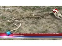 【影】亞塞拜然發現「異獸骸骨」 形體類似卓柏卡布拉