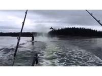 海獅追不上遊艇沒得躲 被殺人鯨甩上天「一秒變海豚」