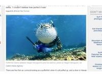 超完美合體 「河豚男」海中自拍照網路瘋傳