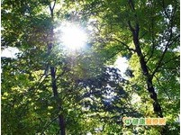陽光傷皮膚 喝綠茶防肌膚老化