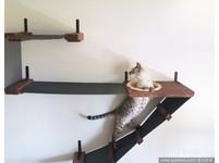 這對情侶太專業!為了迎接毛小孩 自製貓咪家具。(圖/達志影像)
