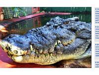 旅客坐船賞日落 卻看見...鱷魚正在分食「男人大腿」