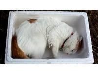 貓叔玩保麗龍箱 粉絲提醒:碎屑恐致中毒!