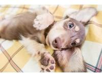 毛孩每天都是這樣過! 微電影記錄愛犬的生活日常