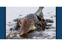 偵探小說真實版? 紐約女雇兇料理前男友「再餵鱷魚」