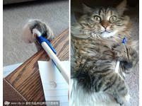 別被無辜臉欺騙了 貓賊被活逮的瞬間!(圖/Exclusive Pix/CFP。以下同)