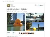 黃色小鴨韓國首爾亮相 「命運多舛」又倒臥湖面...