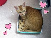 想幫愛貓量體重 用一個「紙箱」就搞定!