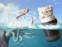 生活童話/寵物小小貓Napoleon的奇幻冒險攝影