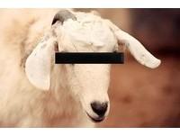 動物可以說不!丹麥將立法禁止「人獸交」!