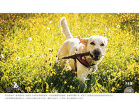 「Mojito - 職業是走狗的小女子」擅長動物攝影,推出桌曆與掛曆為流浪動物募款。(圖/網友Mojito提供,請勿隨意翻拍,以免侵權。)