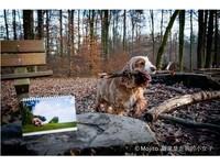 瑞士人妻「職業走狗Mojito」義賣桌曆 捐款助流浪動物