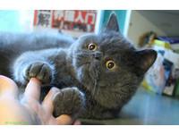 愛得真,痛得深 香港飼主送寵貓「慧果」最後一程