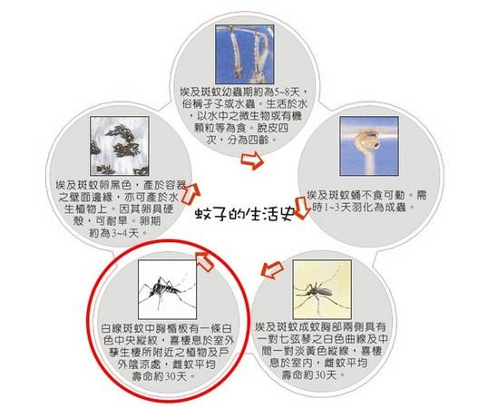 d78795 亞洲虎蚊趁暖入侵歐洲 無視太陽磁場反轉《ETtoday 新聞雲》