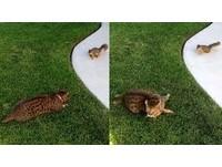 定格10秒「敵不動我不動」 貓被奇襲松鼠嚇到臉歪落跑
