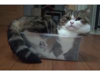 別鬧了...小圓又塞超小塑膠盒 身體肥爆、小肉蹼變形