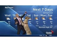 氣象主播帶愛犬上鏡播報 狗狗失控搗蛋搶盡鋒頭
