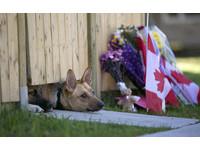 生前擠同張床!加拿大衛兵遭槍殺 大狗仍等主人回家