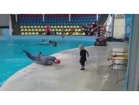你丟我撿!與小男孩默契十足 海豚翹尾表示還想要