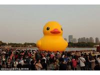 為自閉兒圓一個夢 「MIT」黃色小鴨游進上海鏡天湖
