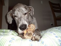 世界最高母狗「摩根」驟逝 主人不捨留言:你在我心中