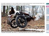 「輪椅神犬」羅斯福不失志 天天都快樂的活著!《ETtoday 新聞雲》
