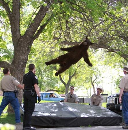 园 被捕上演 空中飞熊图片