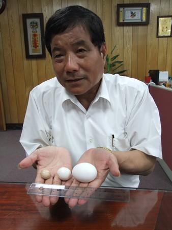 d79338 2.4公分「最小雞蛋」 大園鄉「奇雞」超特別《ETtoday 新聞雲》