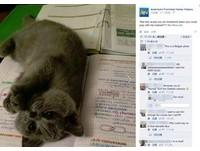 「跟我玩嘛」無敵萌貓躺主人作業簿 抬腳求主人跟牠玩