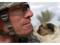 戰場上的相遇 阿兵哥和小動物互動超溫馨