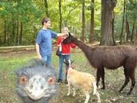【圖】動物搶鏡高手 鴯鶓探頭笑一個!《ETtoday 新聞雲》