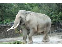 武漢男遊客扔石頭 非洲象回丟砸中無辜女《ETtoday 新聞雲》