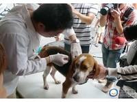 質疑「動物傳染病修正案」資訊不公開 動保團體盼修法