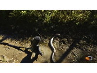 塗豬血被蟒蛇活吞 紀錄片主角:進了血盆大口…好黑