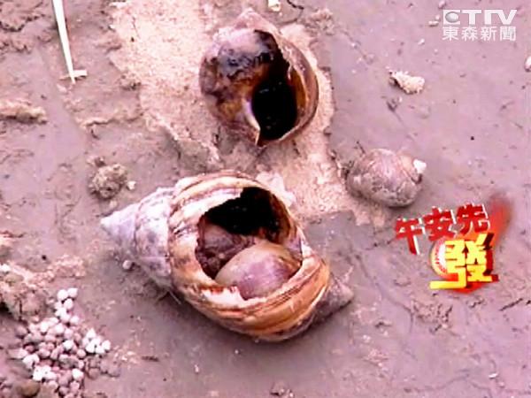 蜗牛的壳破了还能活吗 蜗牛壳碎了还能活吗?