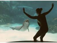 女孩水族館表演體操 海豚停下觀看還咧嘴「笑了」