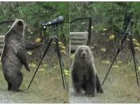 灰熊當冒牌攝影師 拉背帶讓相機翻了「腳底抹油」落跑