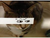 貓奴的逆襲 日本玩起一秒就崩壞的貓咪蒙太奇