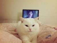 「不能入戲了啦!」主人看韓劇 圓滾貓臭臉監視