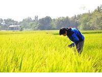 以科技協助農業 「沃野食農會社」力推友善耕作理念