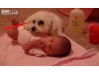 吸塵器好恐怖! 小白狗窩到寶寶胸口:我保護妳