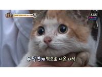 困在水溝2個月 南韓小貓撐到獲救了!
