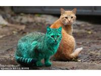 保加利亞「浩克貓」全身綠 好心人想誘捕幫牠洗乾淨!