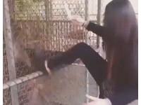 台妹走馬瀨虐待小猴子 先假裝餵你...再起腳猛踹鐵籠